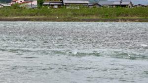 中洲も冠水する魚野川