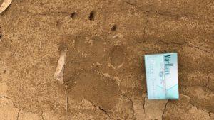 ヒグマの足跡