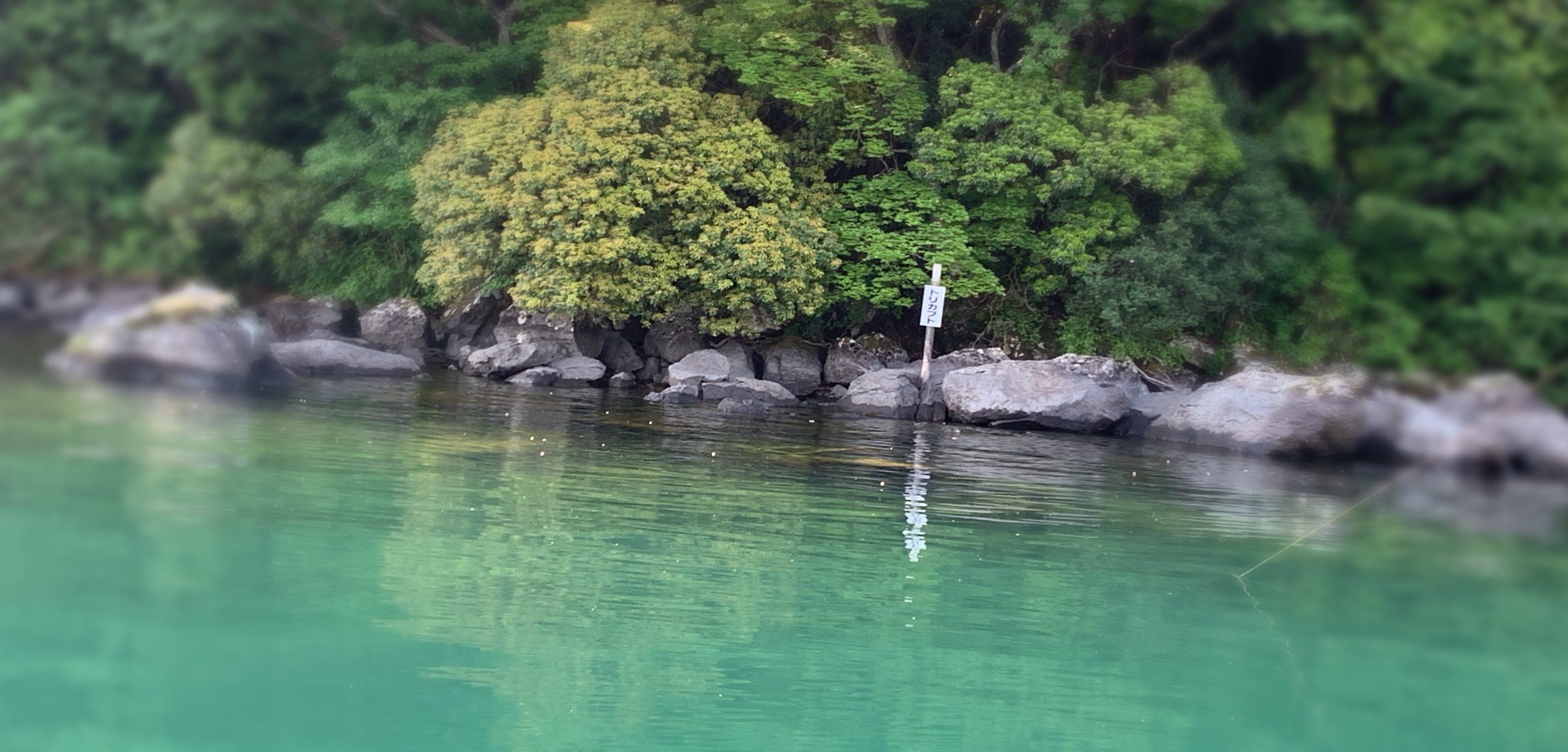 芦ノ湖トリカブト
