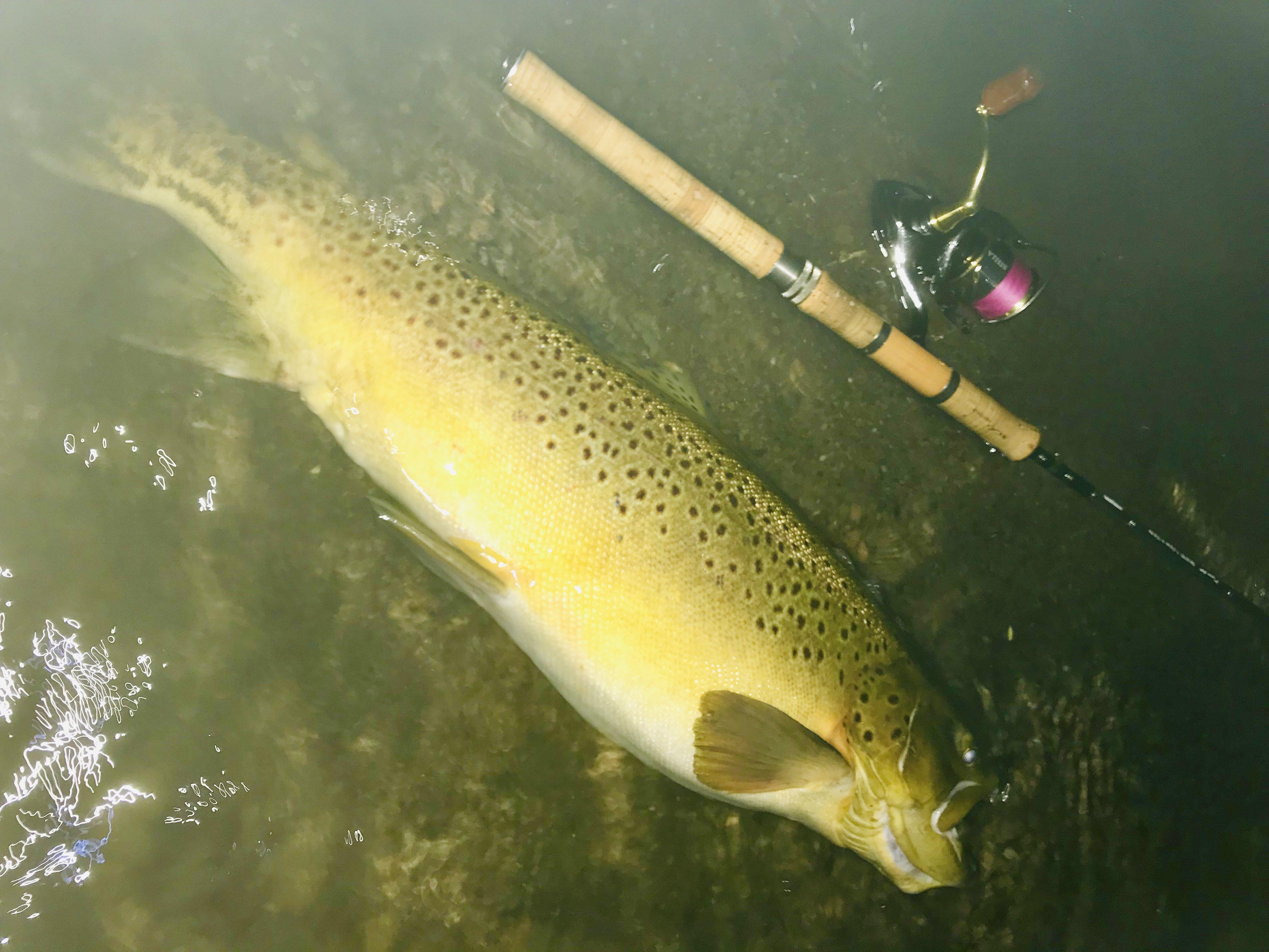 芦ノ湖のモンスターブラウン72cm