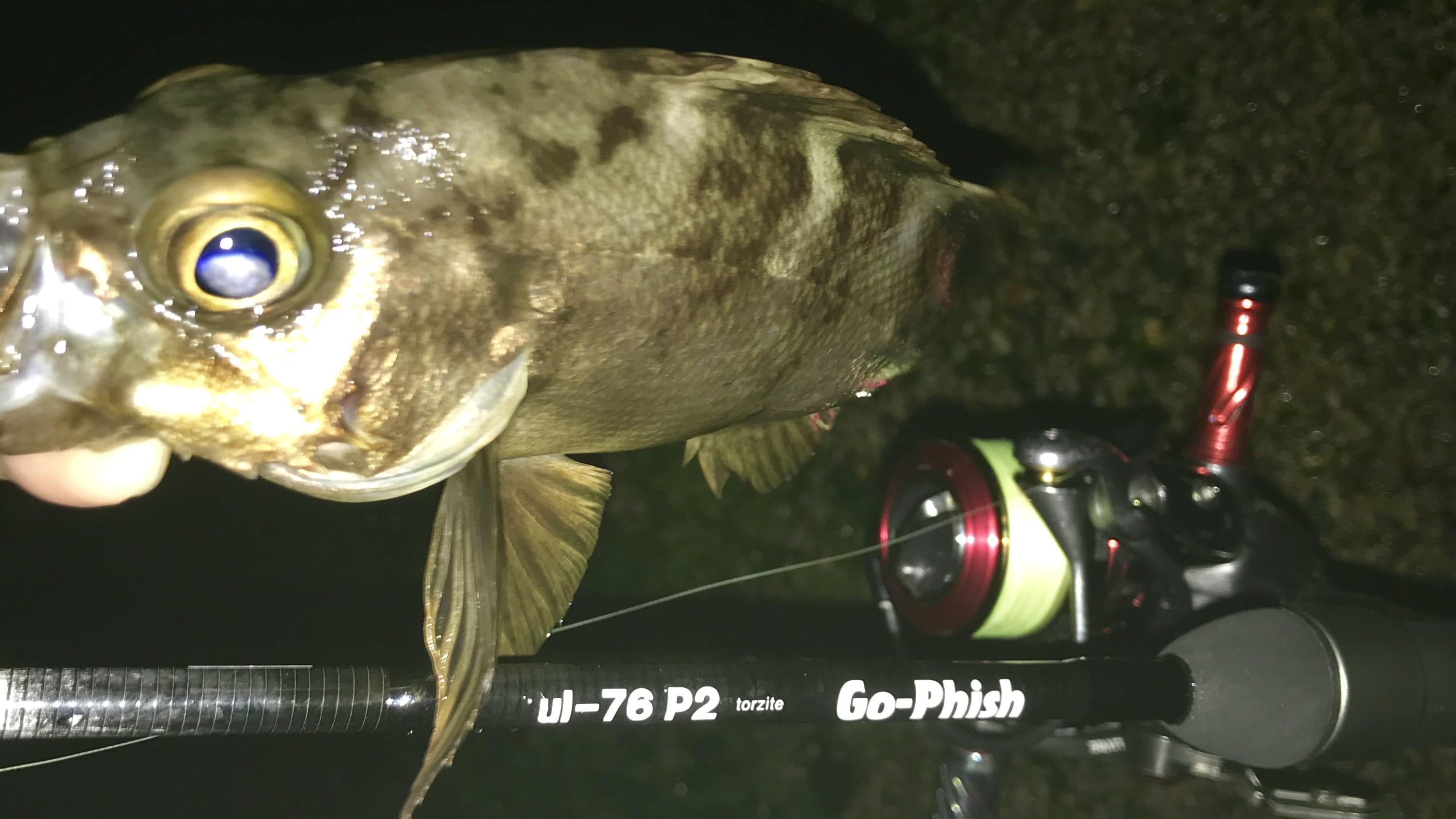 早川港のメバル釣り
