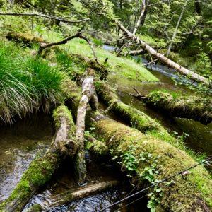 苔むした美しい森