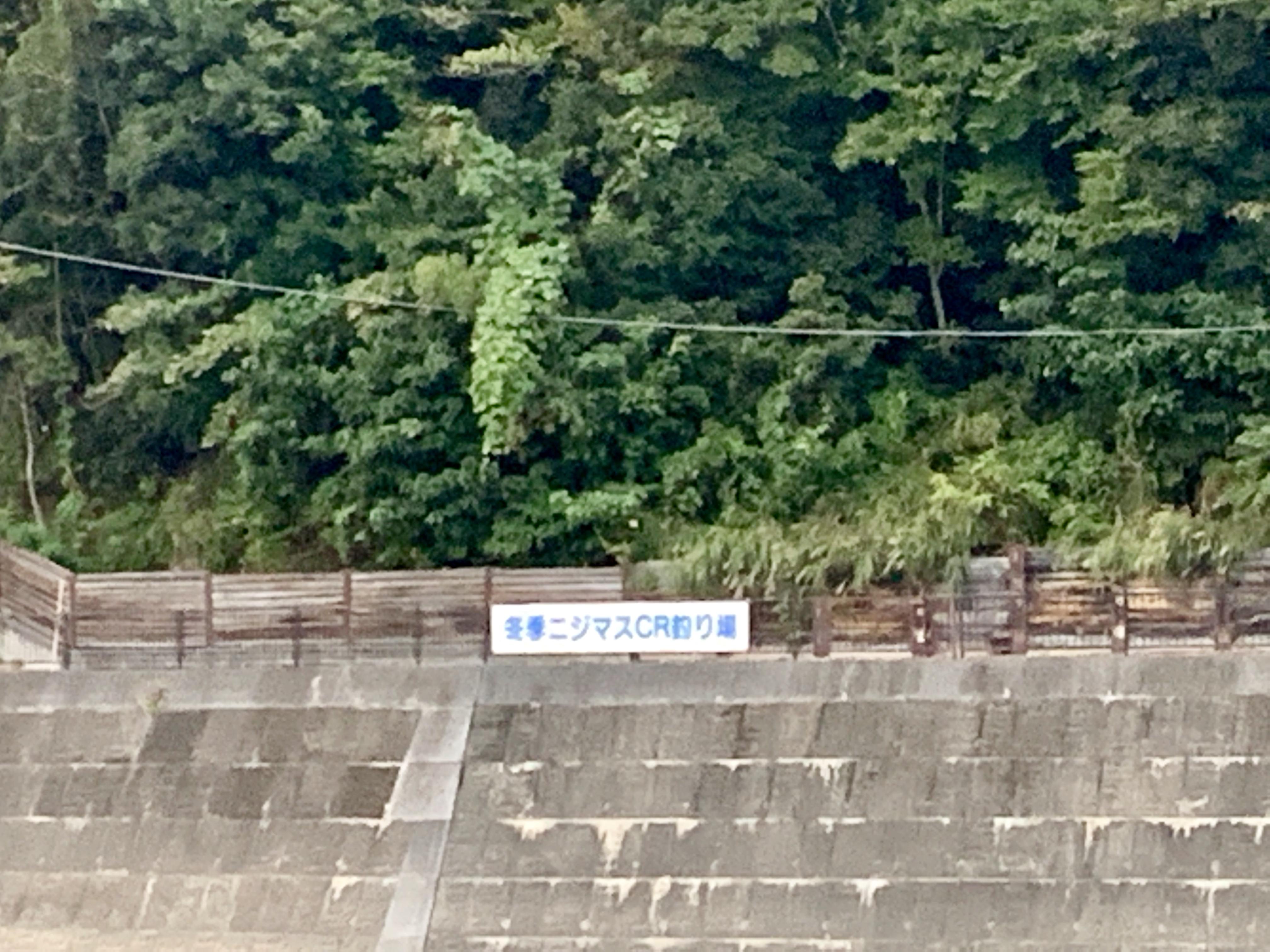 荒川本流ニジマスC&R