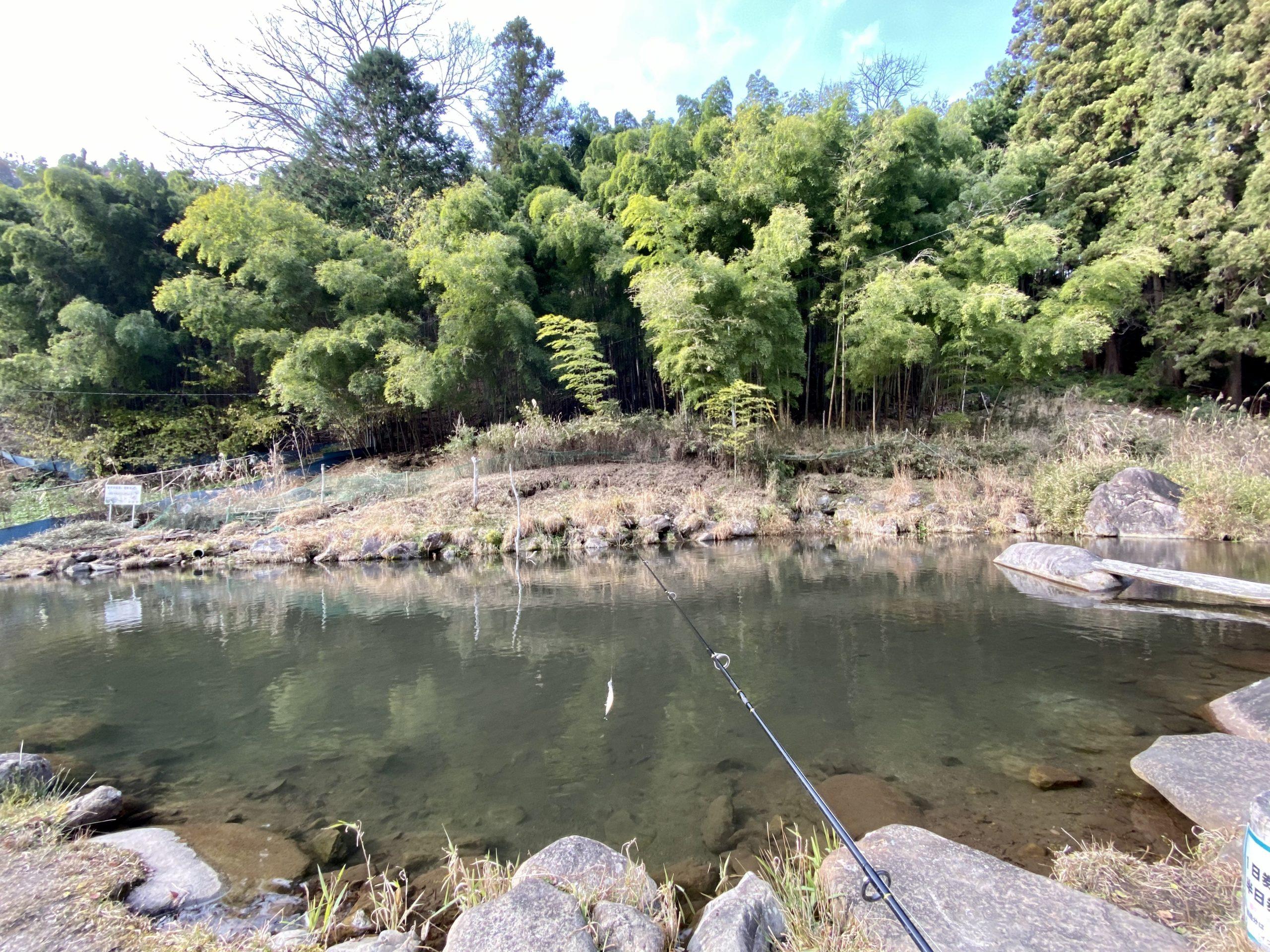 奈良子釣りセンターのヤマメ池