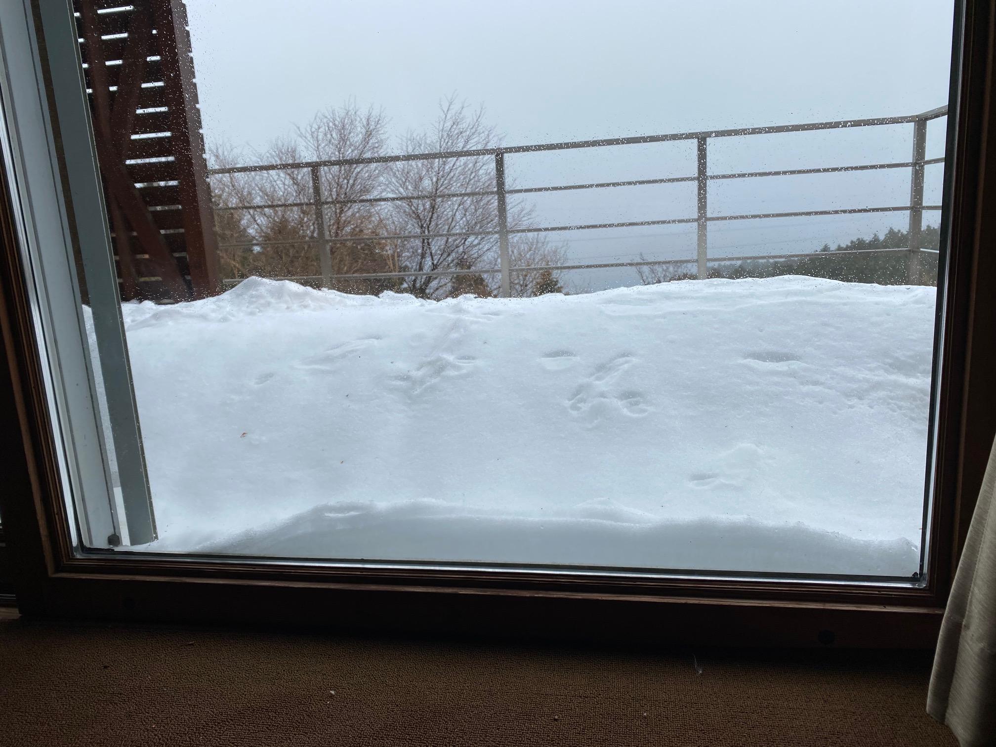 テラスにも雪