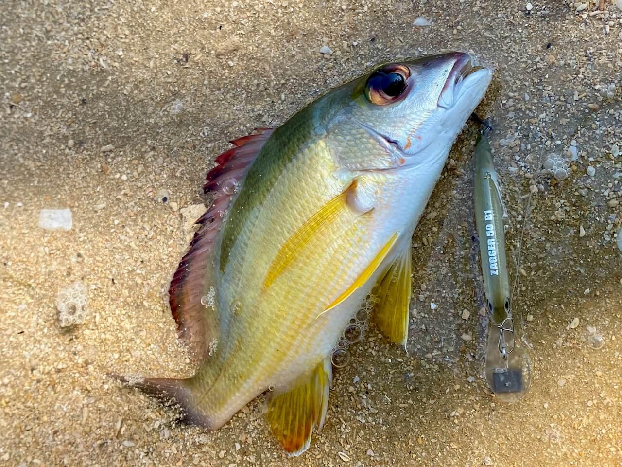 西表島のルアー釣り