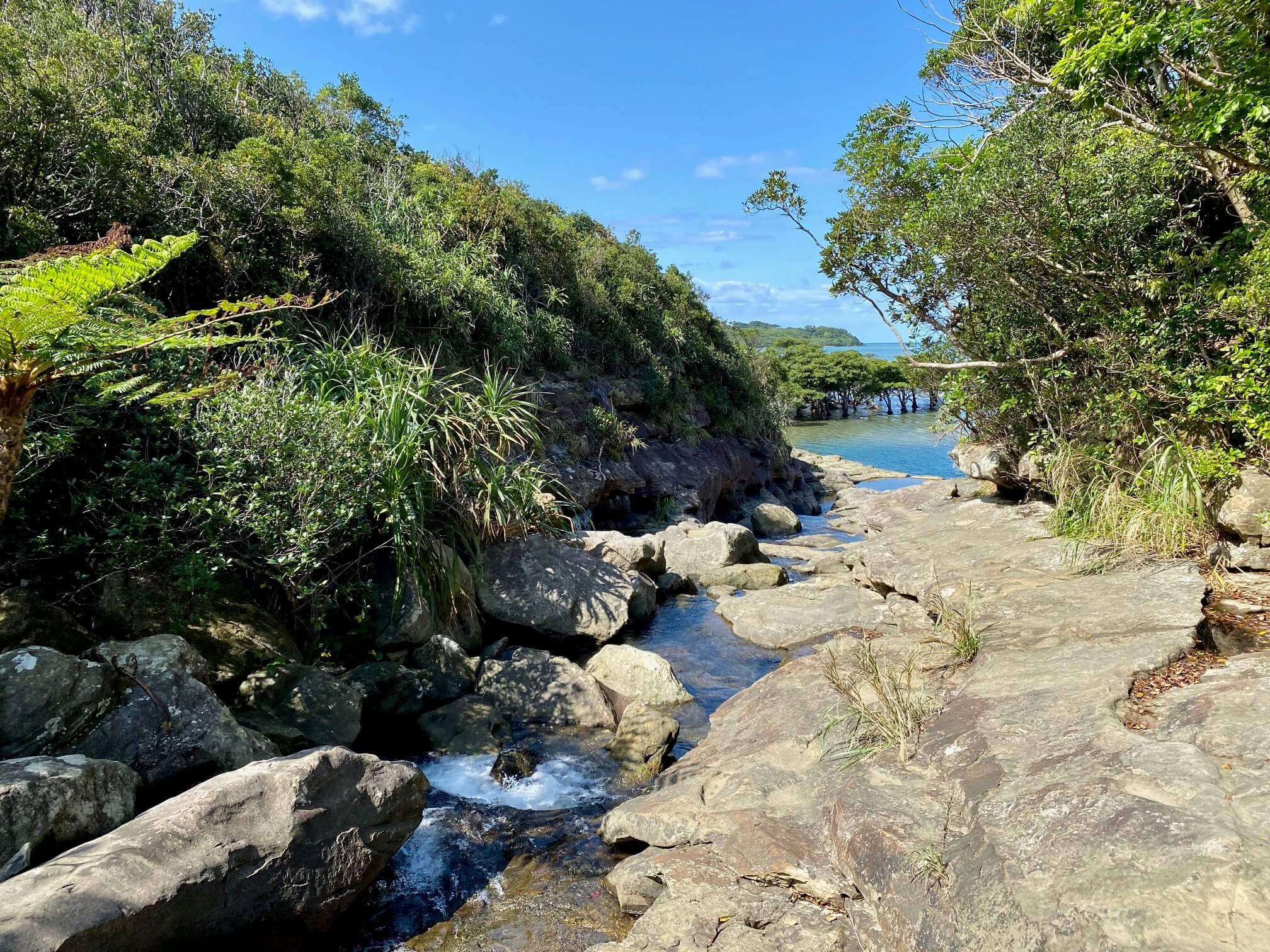 西表島の淡水