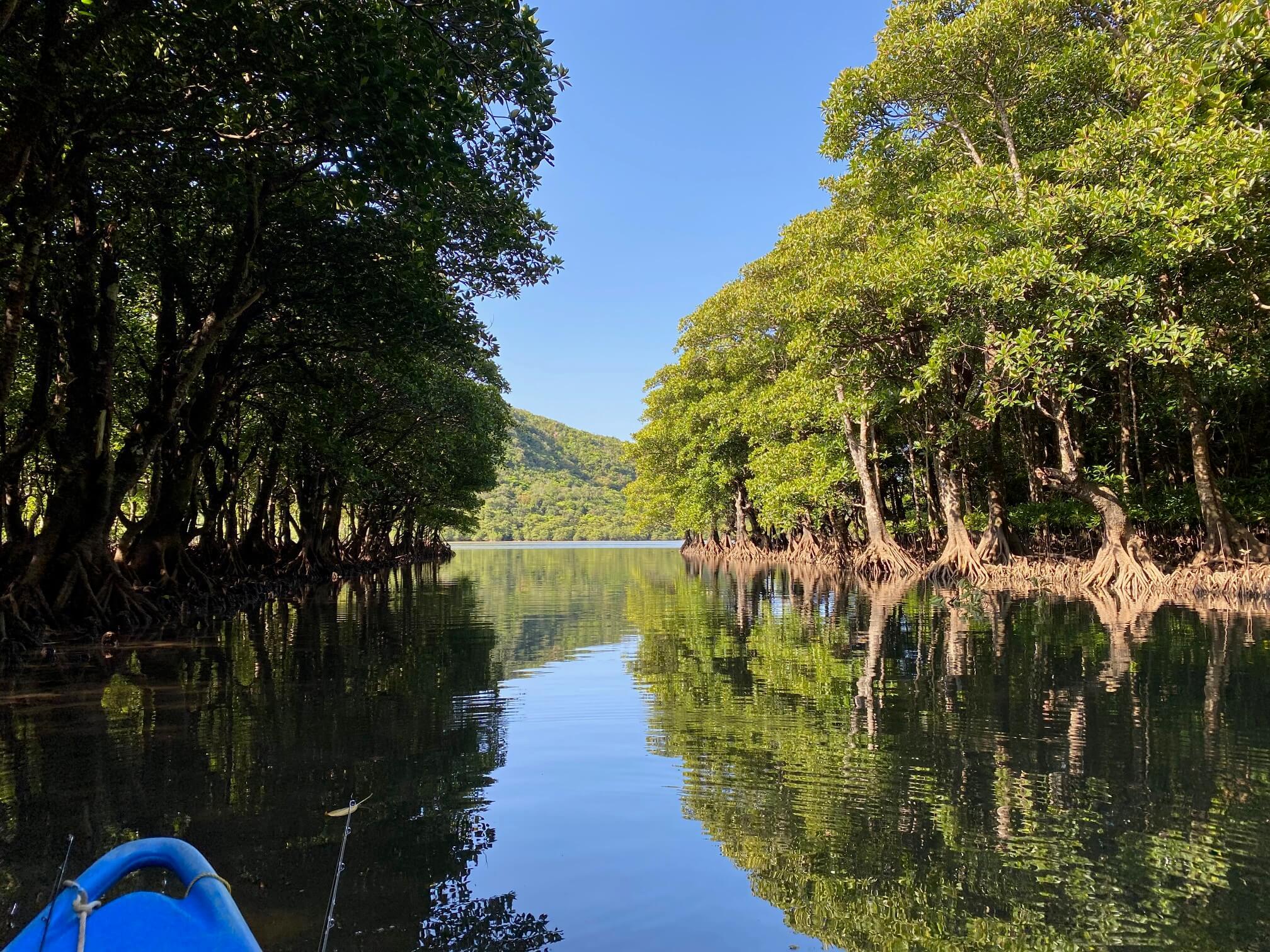 マングローブの川を攻める