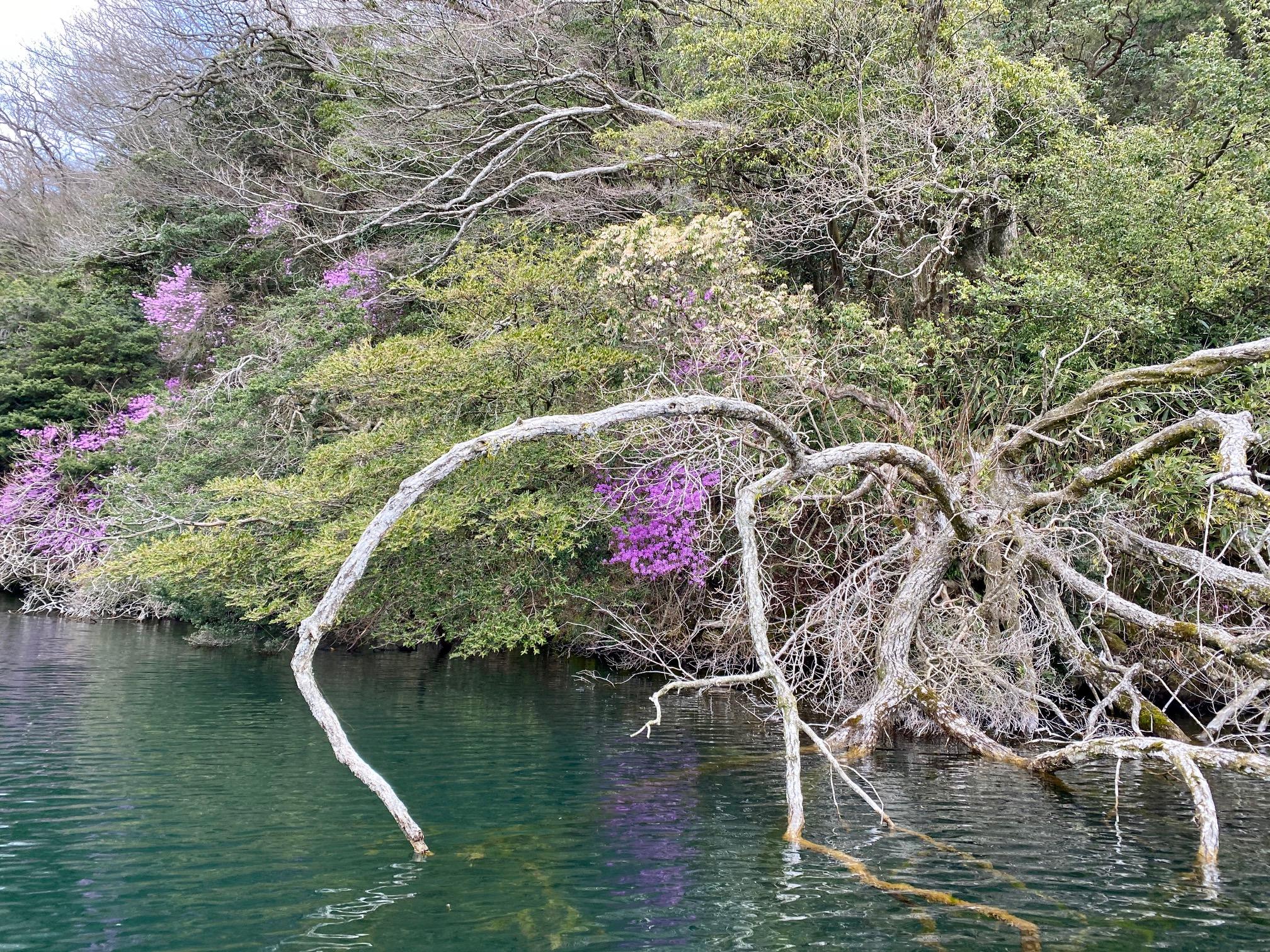 芦ノ湖 神宮 バス釣りポイント