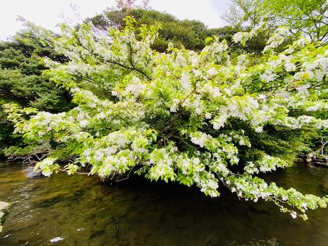 湖岸に咲く花