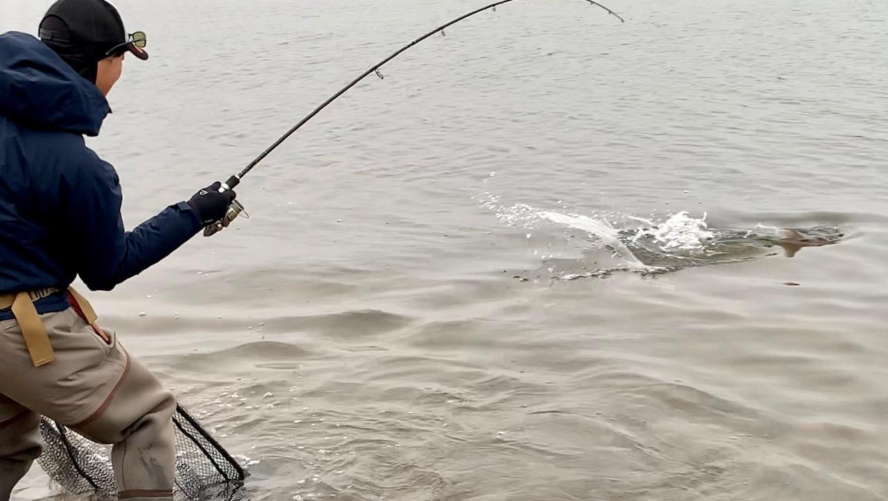 朱鞠内湖のイトウヒットシーン