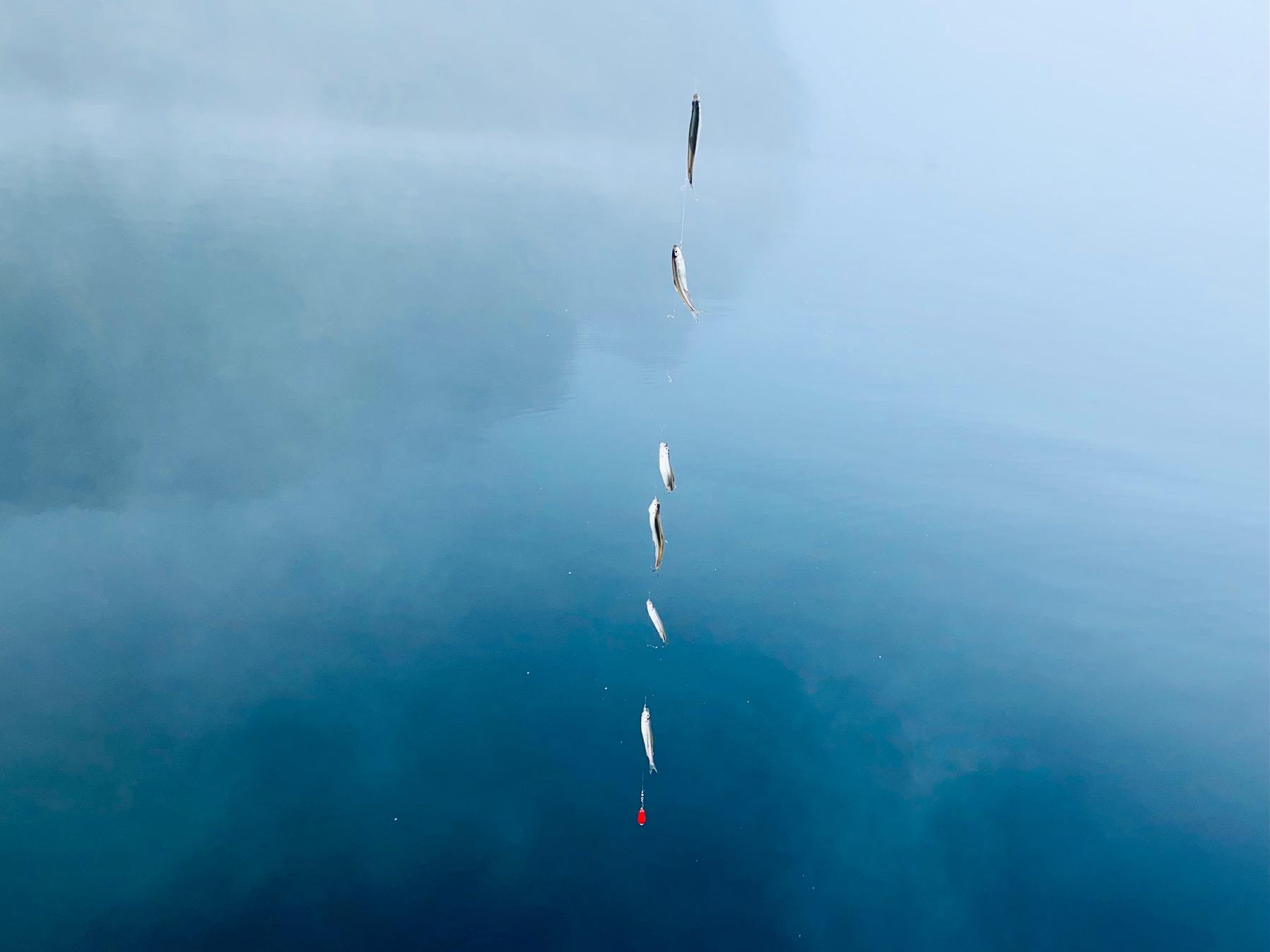 芦ノ湖のワカサギ釣り