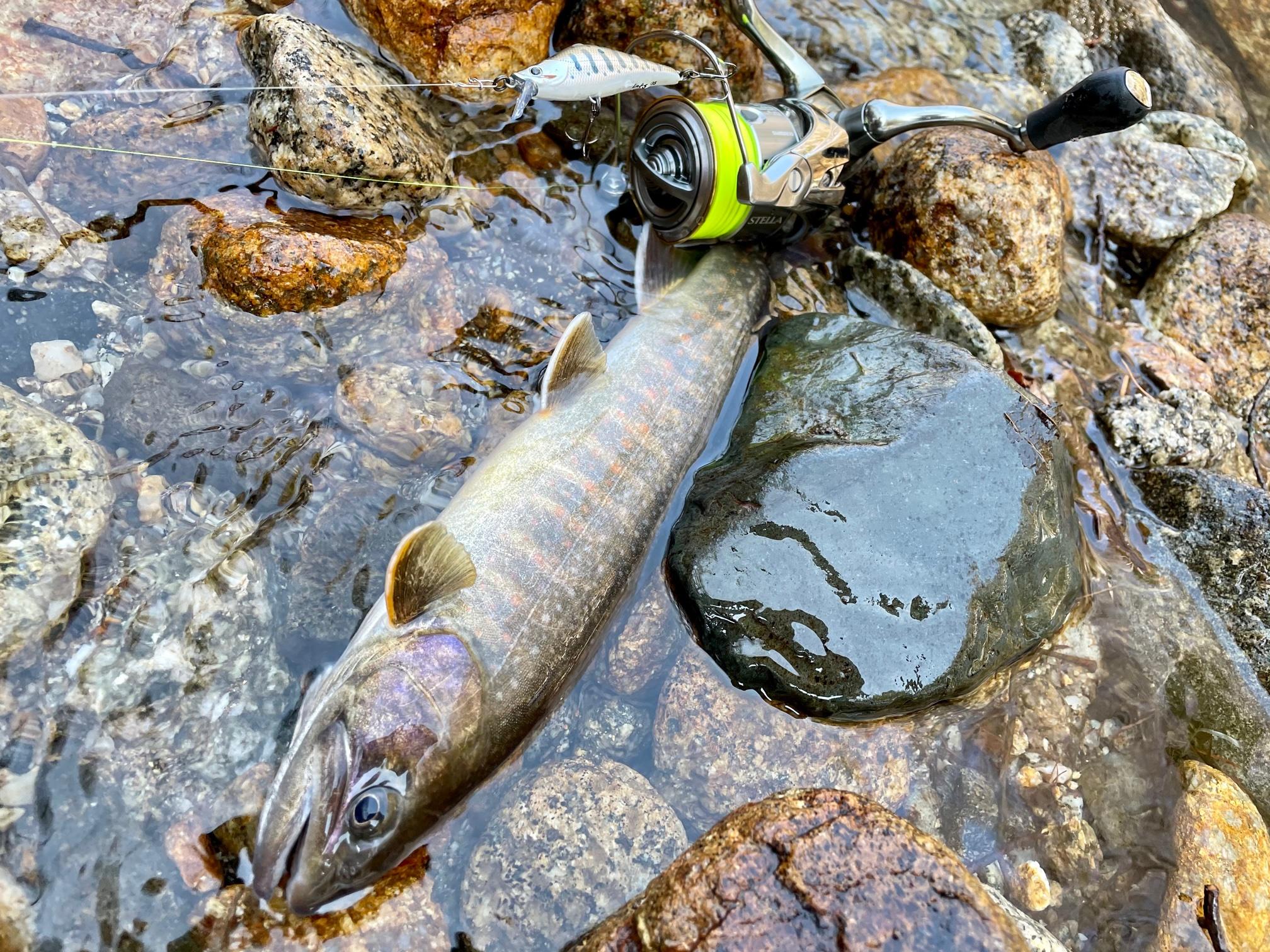 3月の源流域でイワナ釣り
