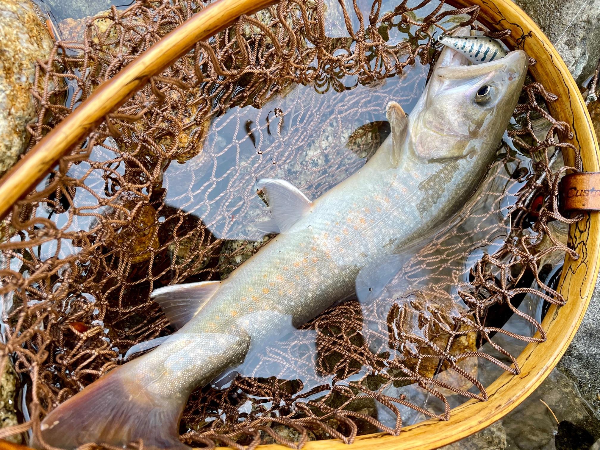 源流早春のイワナ釣り