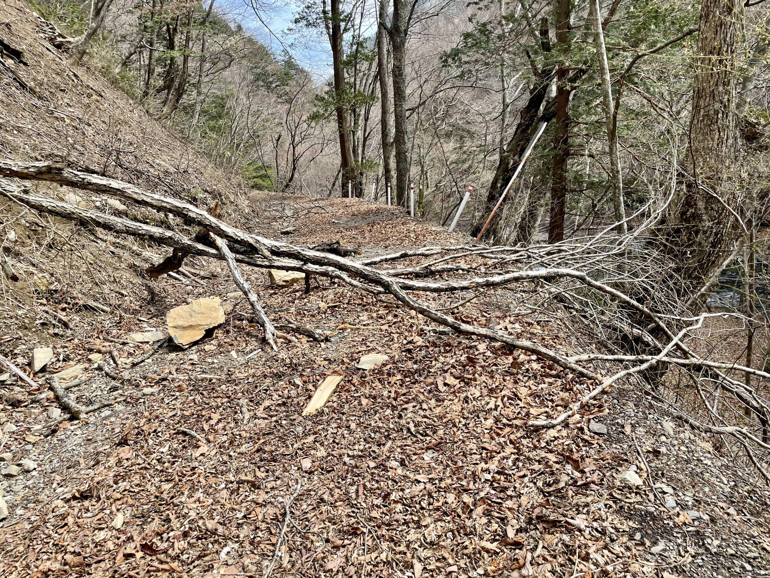 林道に倒木
