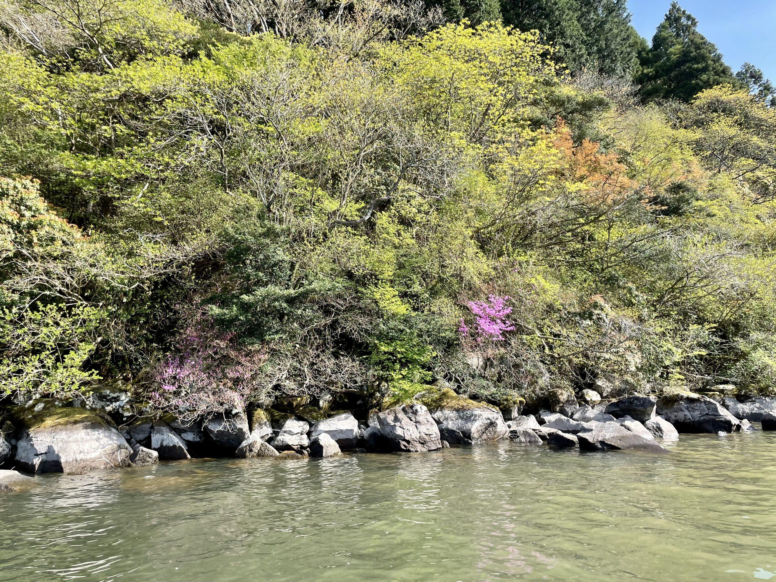 ツツジもキレイな芦ノ湖