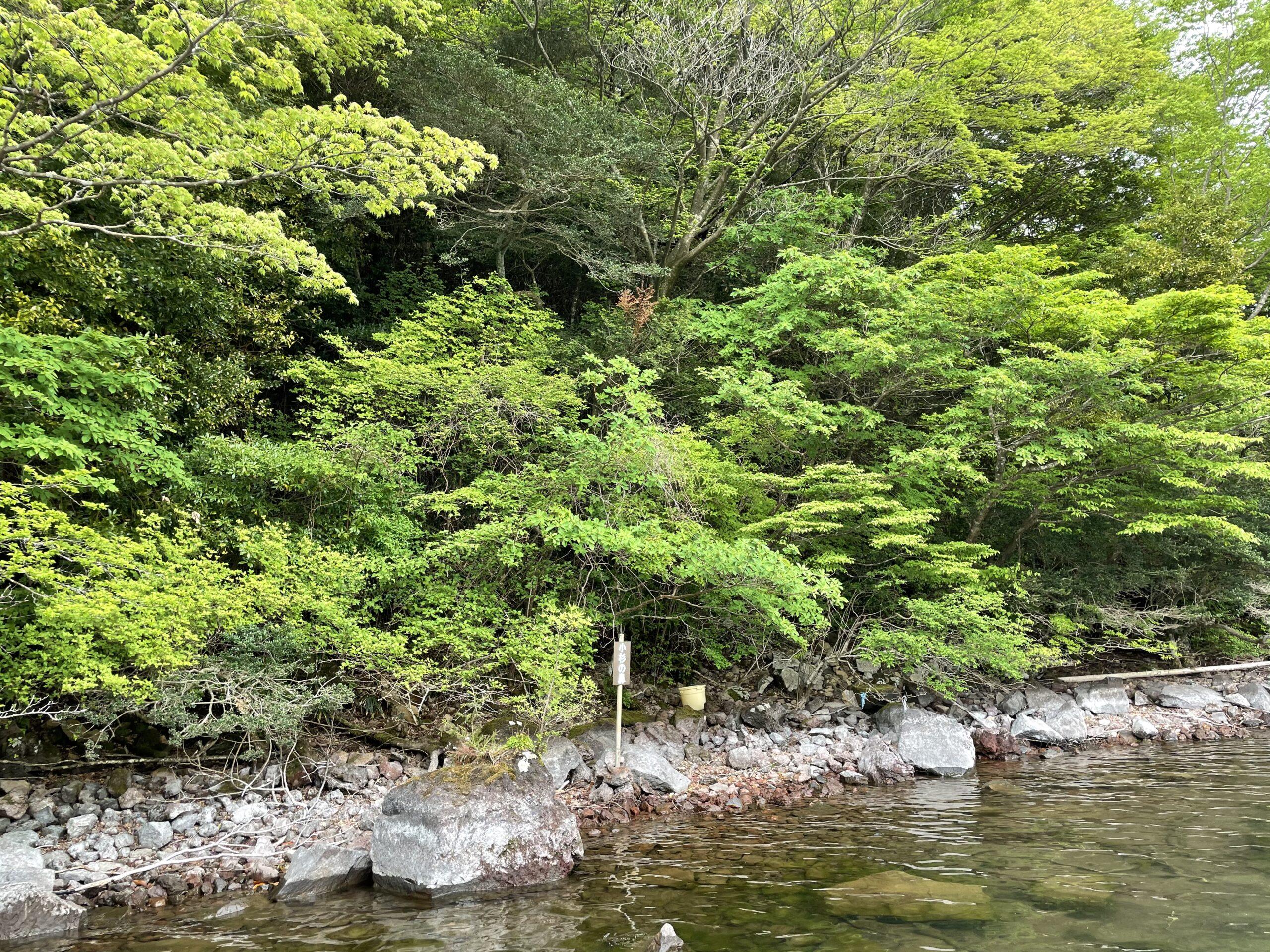 芦ノ湖 小杉の鼻