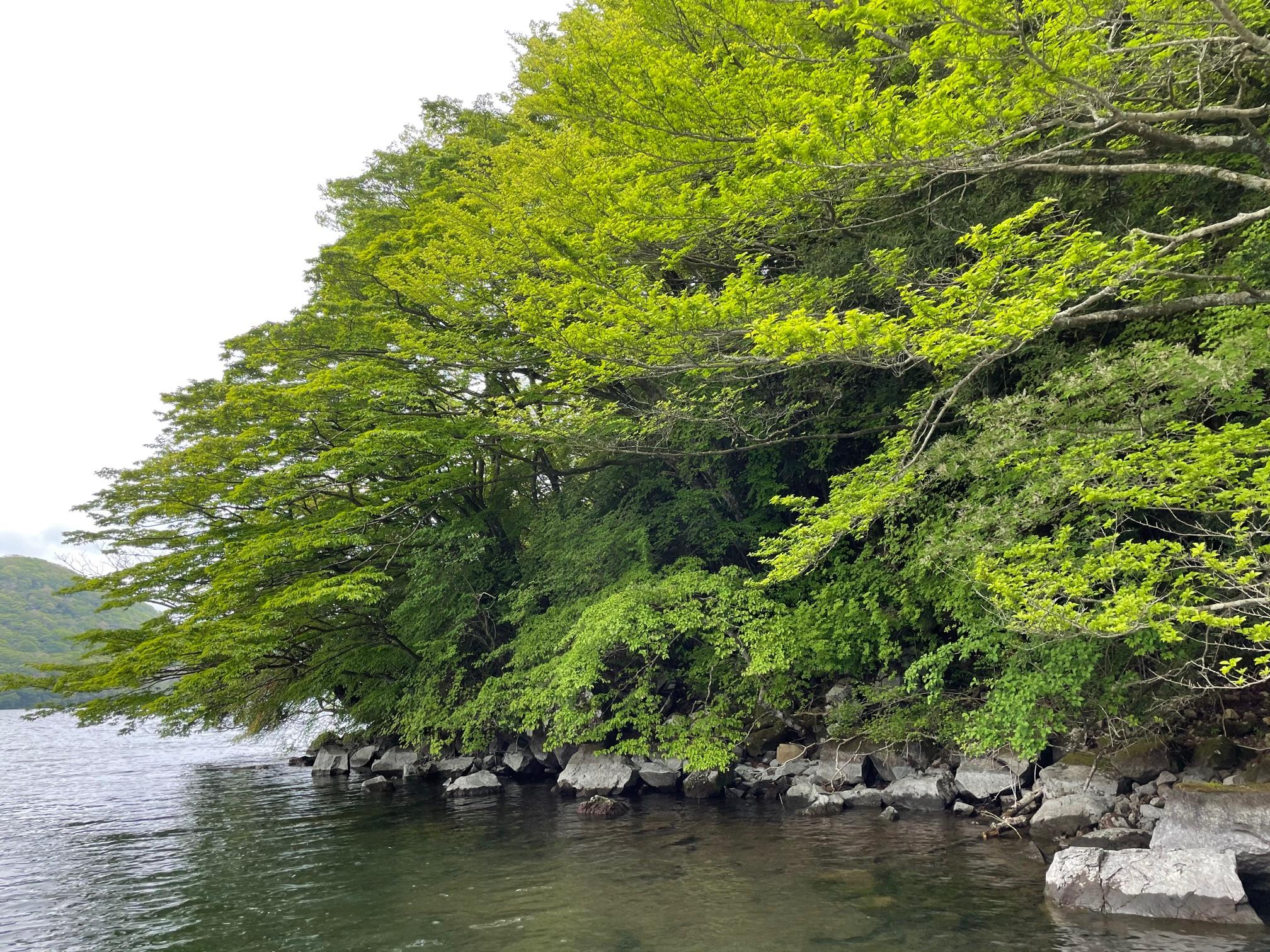 新緑の芦ノ湖で釣り