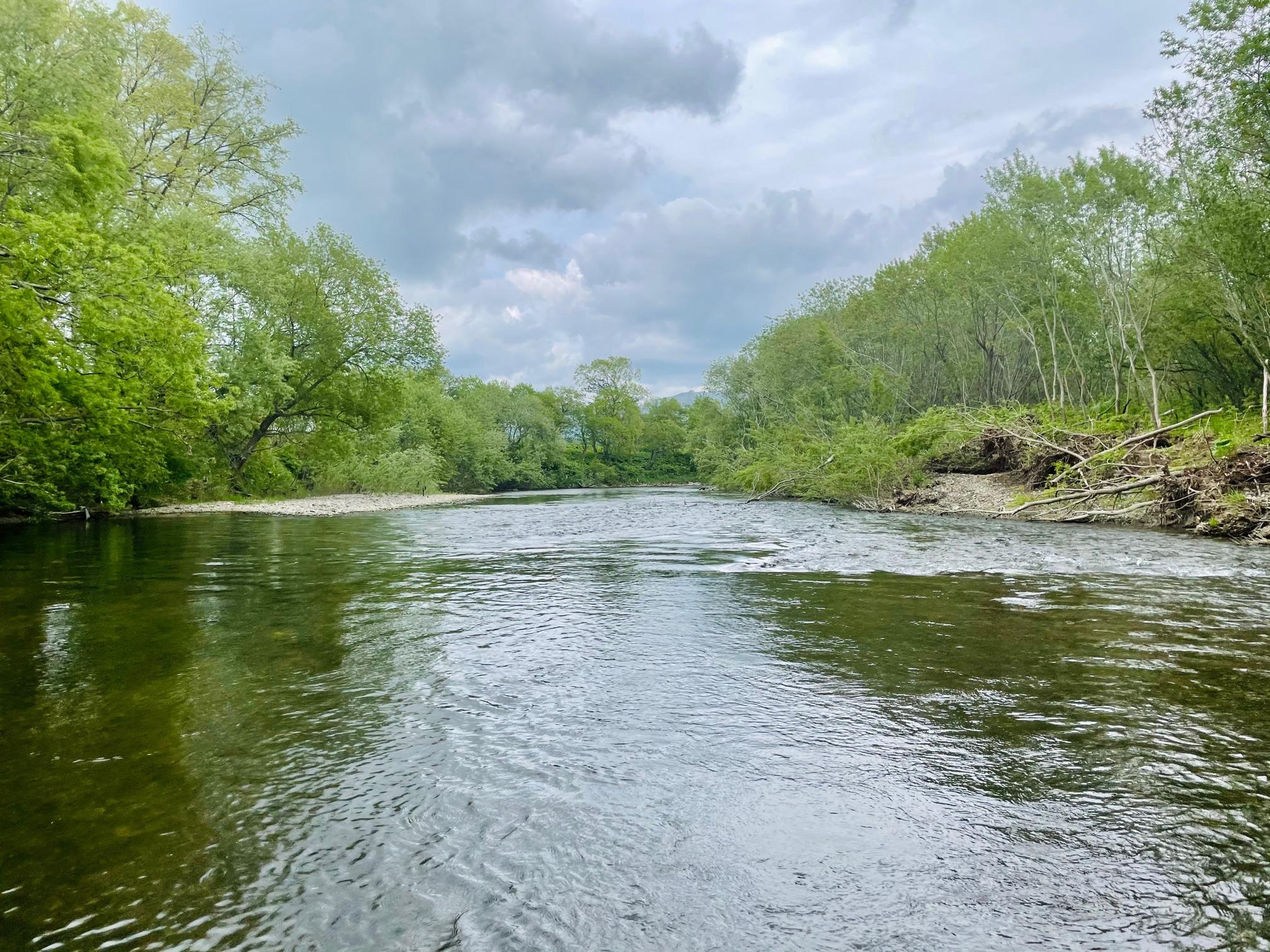 頓別川中流で釣り