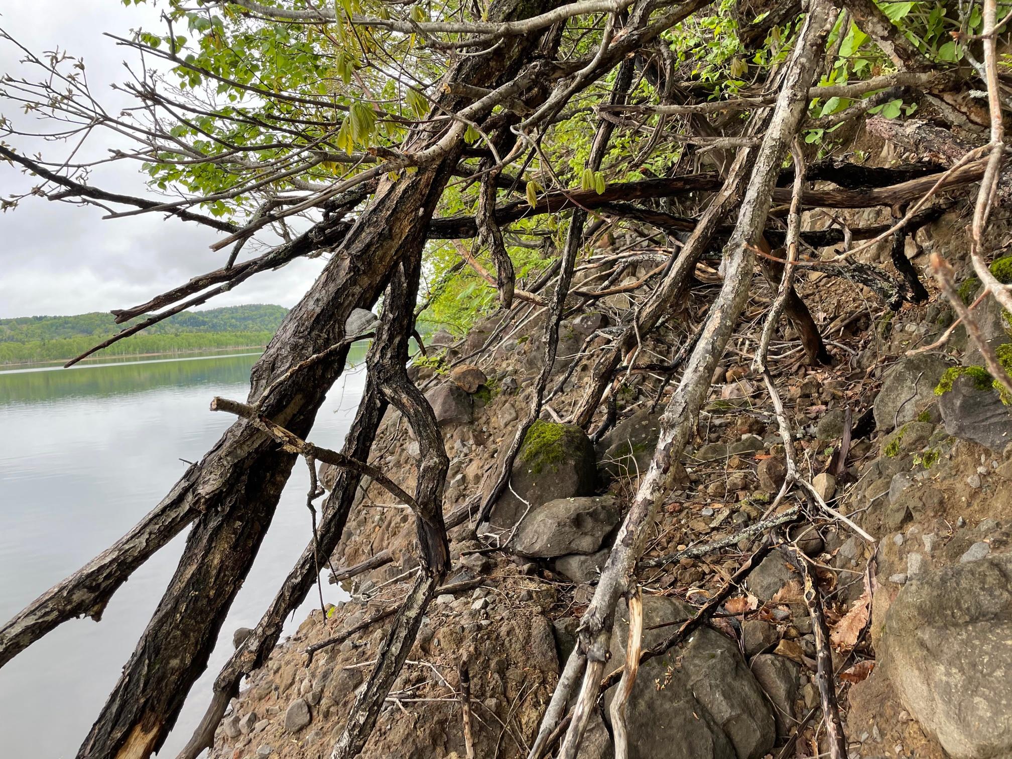 朱鞠内湖 ナマコの壁