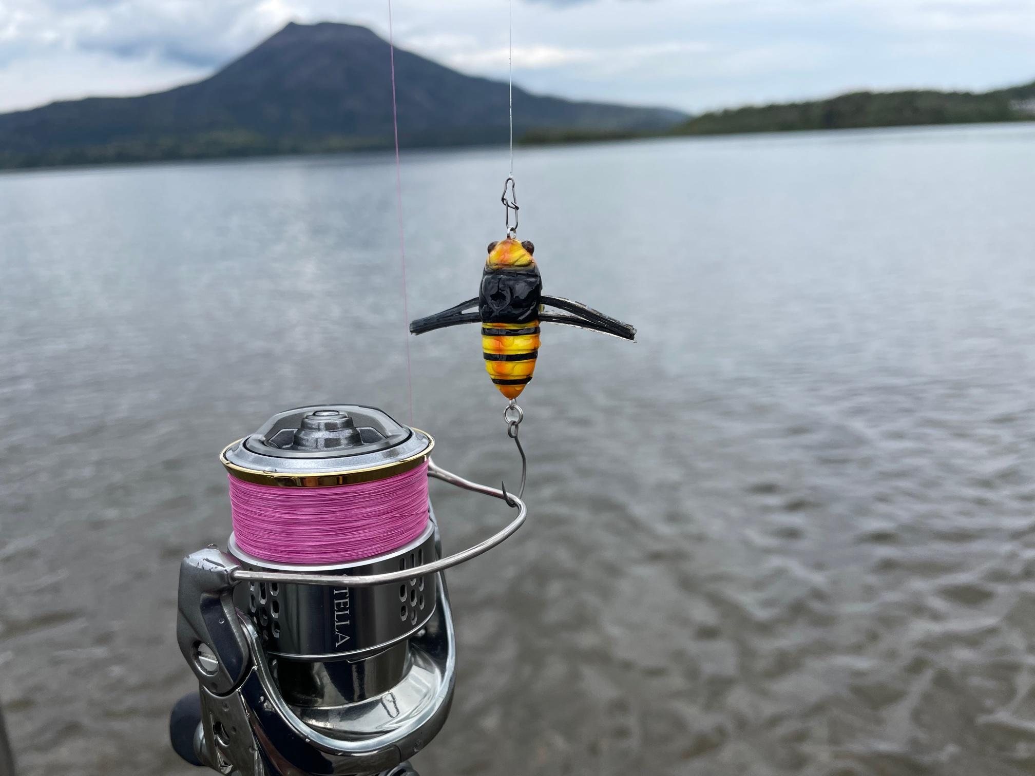 阿寒湖の蝉