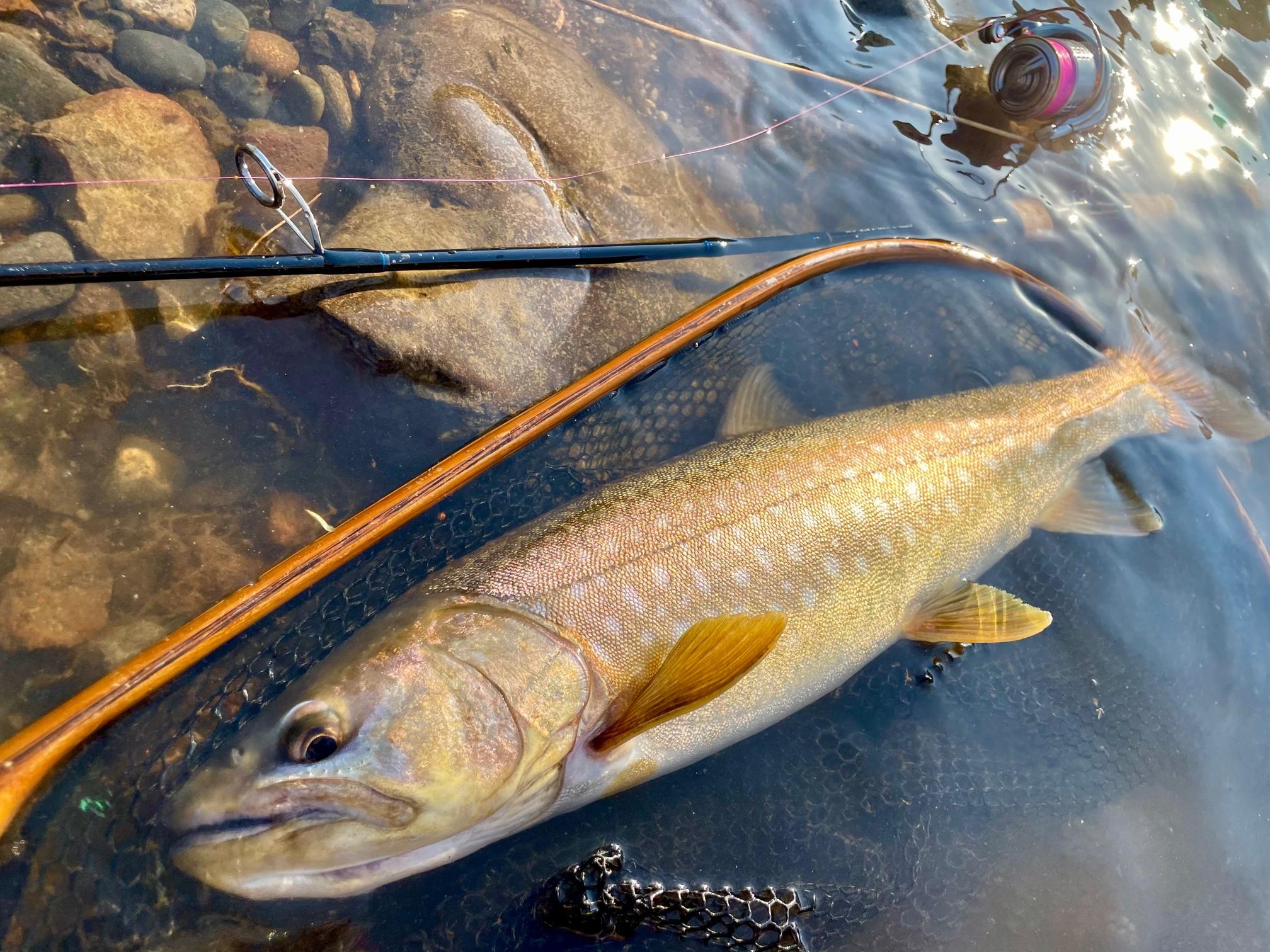 阿寒湖のアメマス釣り