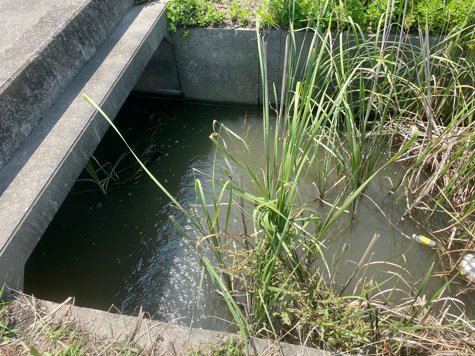 川島町の用水路