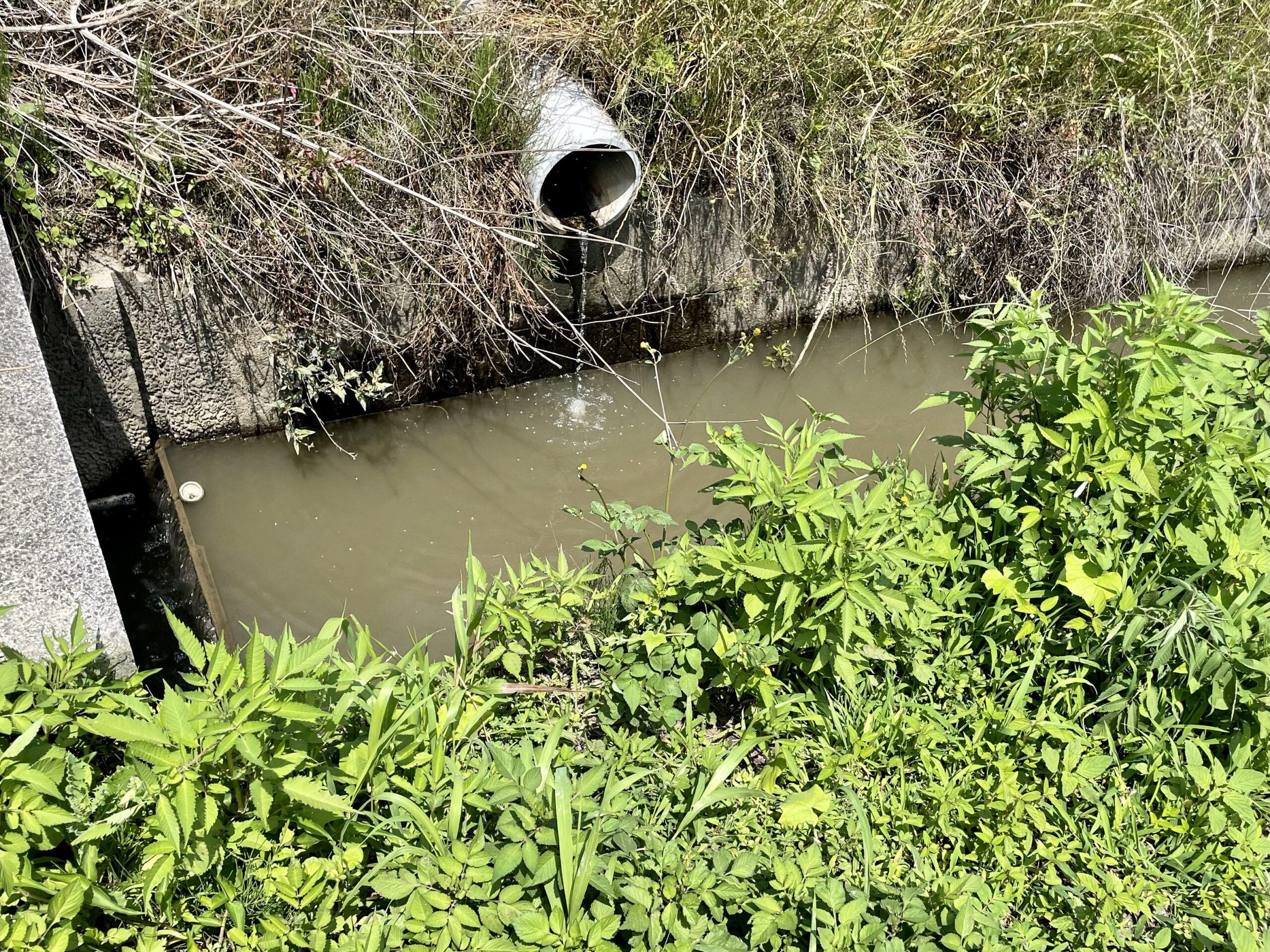 川島町の用水路で小物釣り