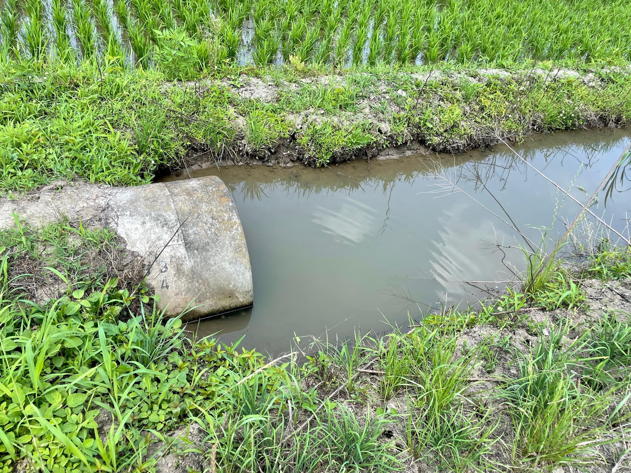 田んぼの用水路で釣り