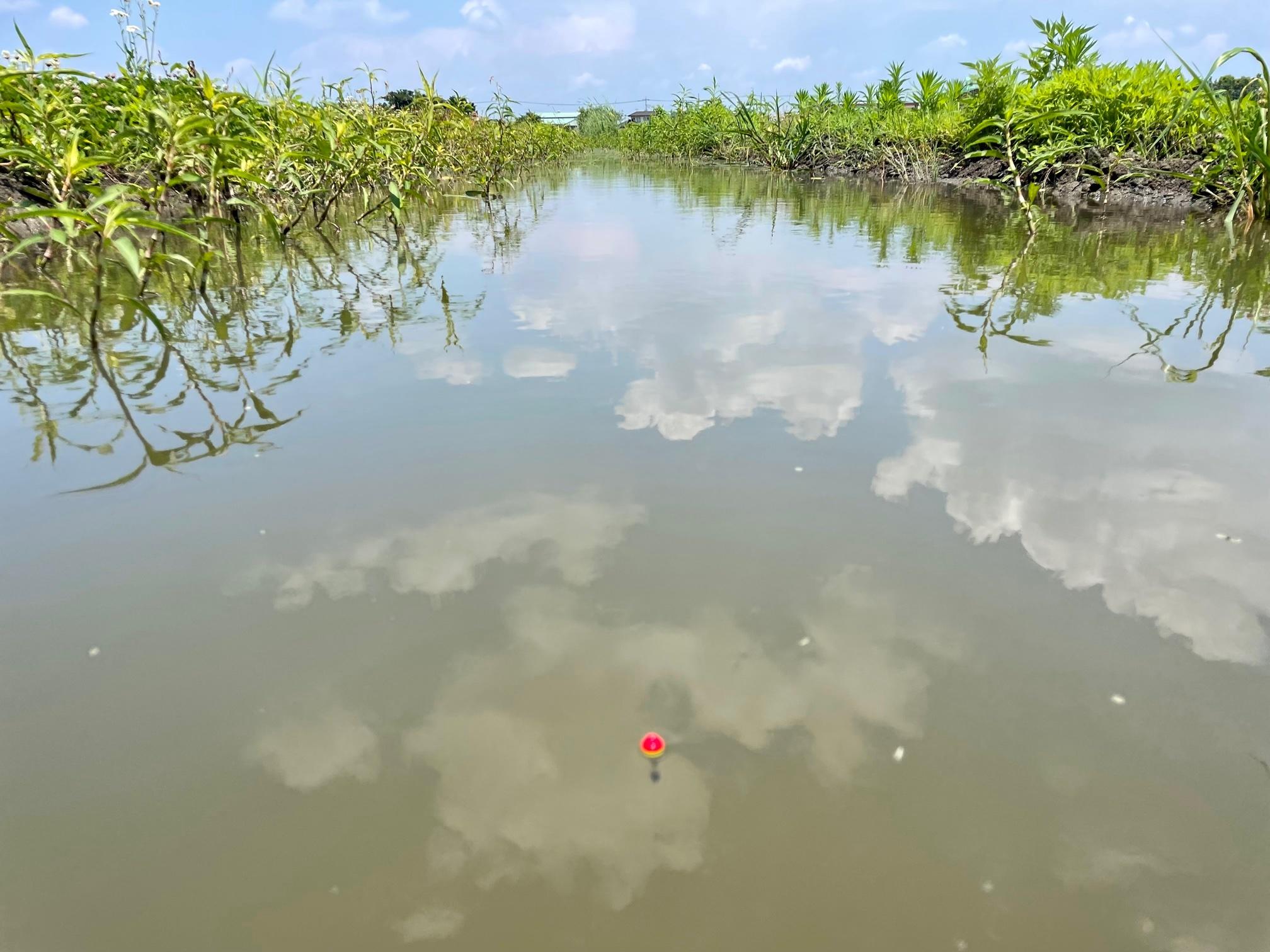 川島町の用水路で釣り