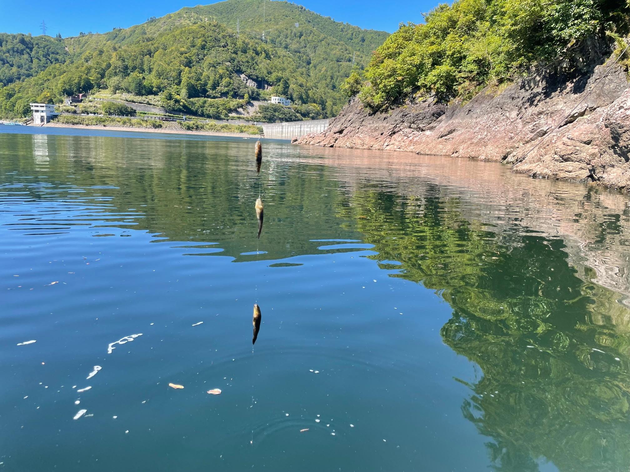 銀山湖 ヌマチチブ