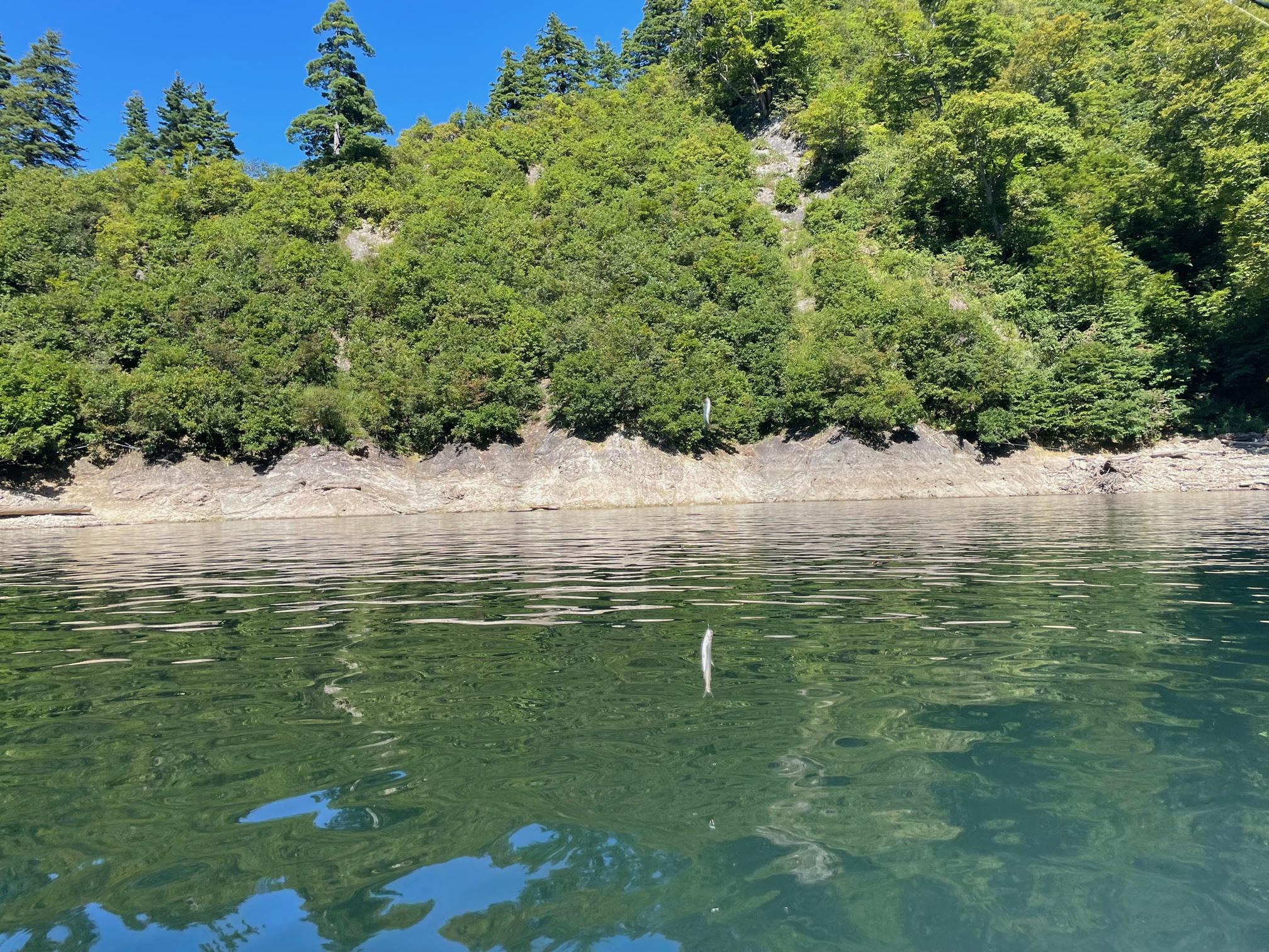 銀山湖釣り